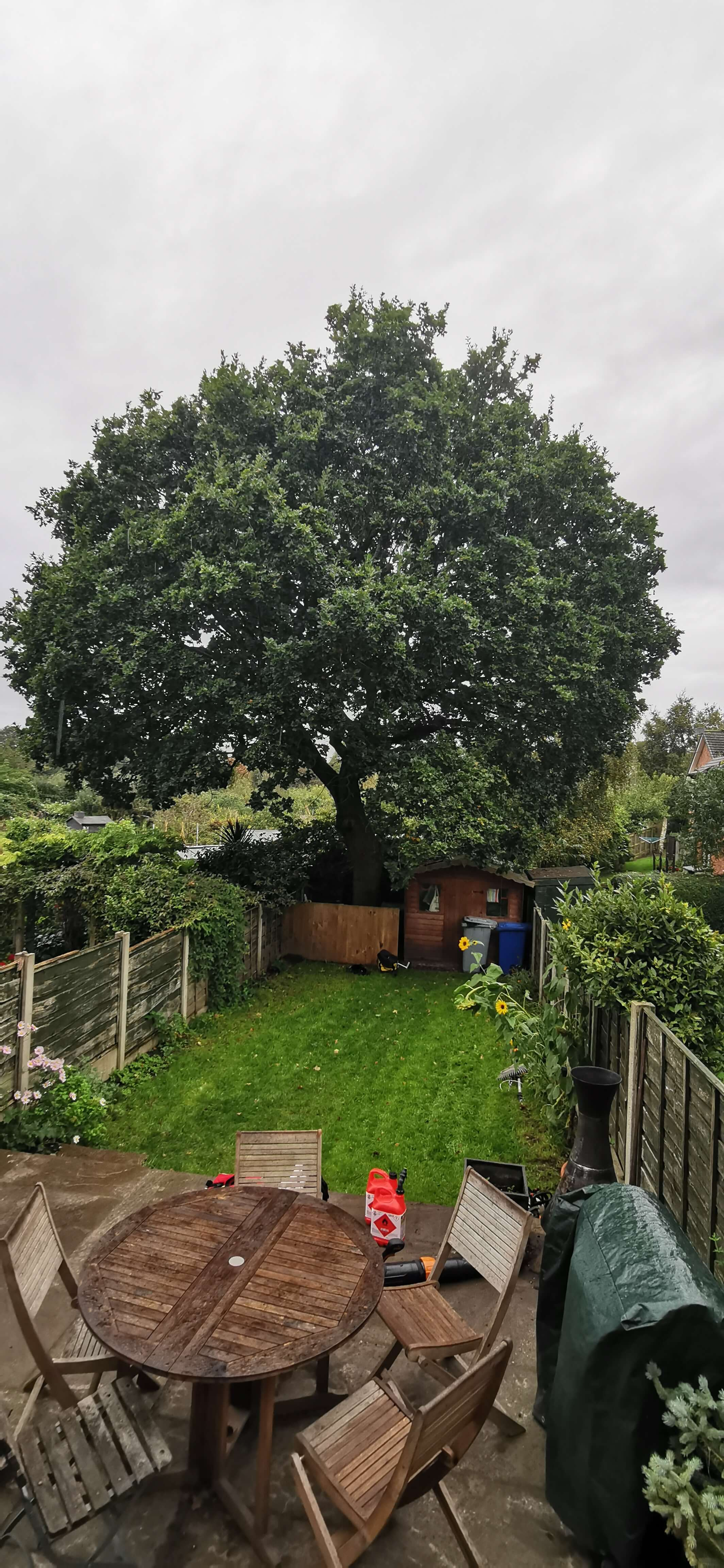Bowdon Oak tree - Before shot